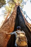 Hiker in Sequoia national park in California, USA.  royalty free stock images