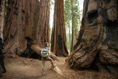 Hiker in Sequoia national park in California, USA.  stock photography