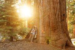Hiker in Sequoia national park in California, USA.  stock photo