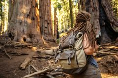 Hiker in Sequoia national park in California, USA. Hiker in Sequoia national park in California. USA royalty free stock photography