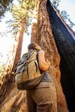 Hiker in Sequoia national park in California, USA.  royalty free stock image