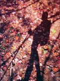 A hiker shadow on fall maple trees on the ground Royalty Free Stock Photos