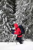 Hiker with ski poles makes his way on snowy slope in snow-covered forest at winter day after snowfall. royalty free stock photos