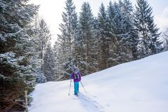 Hiker with snowshoes on snow trail in winter landscape of forest in Oberstdorf, Bavaria Alps in South of Germany. Beautiful. Landscape with coniferous trees and royalty free stock images