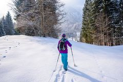 Hiker with snowshoes on snow trail in winter landscape of forest in Oberstdorf, Bavaria Alps in South of Germany. Beautiful. Landscape with coniferous trees and stock image