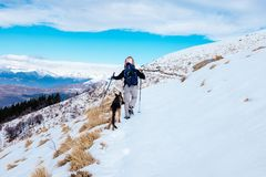 Hiker walks in snow-covered mountain with his German shepherd do. Hiker with snowshoes walks in the snowy mountain on a bright morning, accompanied by his dog of Royalty Free Stock Photos