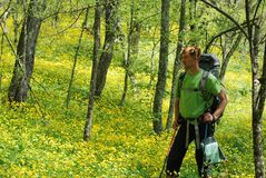 Hiker in spring forest Stock Photos