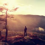 Hiker stand at heather bush on the corner of  empire bellow pine tree and watch over misty and foggy morning valley Royalty Free Stock Photo