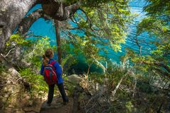 Hiker stands on the coast of a lake. Under the tree royalty free stock photos