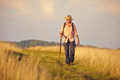 Hiker with Stick on meadow Royalty Free Stock Photos