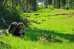 Hiker Taking Photos. A hiker pauses in a lush green meadow to take pictures of the scenery in Eastern Oregon Stock Images