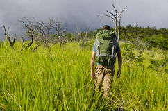 Hiker in Tall Grass Royalty Free Stock Photos