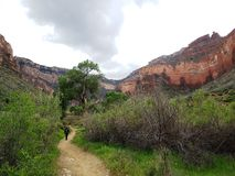 Hiker on a trail in  grand canyon Royalty Free Stock Photography