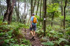 Hike in Hawaii. Hiker on the trail in green jungle, Hawaii, USA stock images