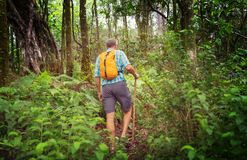 Hike in Hawaii. Hiker on the trail in green jungle, Hawaii, USA royalty free stock photography