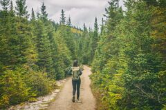 Free Hiker Travel Woman Walking On Trail Hike Path In Forest Of Pine Trees. Canada Travel Adventure Girl Tourist Trekking In Stock Photos - 193896953