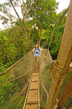 Hiker on tree Canopy walkway above the rain forest Stock Image