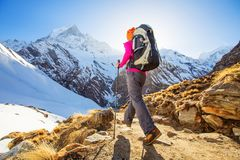 Hiker on the trek in Himalayas, Annapurna valley, Nepal.  stock images