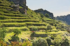 Hiker,trekker,path,gods,amalfi coast,walking,terraces Royalty Free Stock Photo