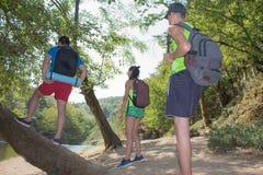 Hiker trekking на следе в туристах группы леса исследуя природу идя через древесины Стоковое Изображение RF