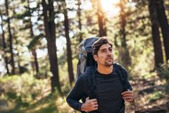 Man walking in forest wearing a backpack. Hiker trekking on the trail in a forest. Man exploring nature walking through the woods Stock Images