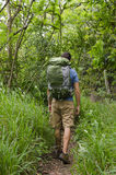 Hiker in Tropical Forest Stock Photos