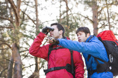 Hiker using binoculars while friend showing him something in forest Royalty Free Stock Photography