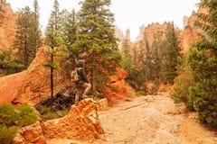 Hiker visits Bryce canyon National park in Utah, USA royalty free stock photography