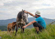Hiker is waching horses in mountains Stock Photos