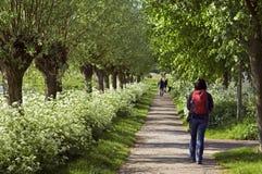 Hiker walking between floral splendor, Netherlands Stock Photo