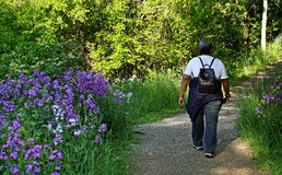 Hiker Walking into Forest Stock Photography