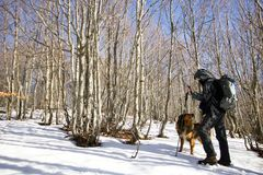Hiker walking with his dog  in a beech forest in winter. On the mountain Stock Photo