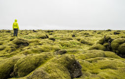 Hiker walking on a mossy landscape in Iceland Royalty Free Stock Image