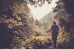 Hiker walking in a mountain forest Stock Photo