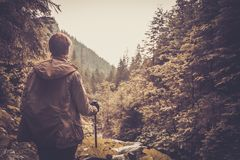 Hiker walking in a mountain forest. Hiker with hiking poles walking in a mountain forest Royalty Free Stock Image