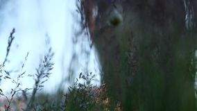 Hiker walking outdoors, low angle close up of foot. stock video footage