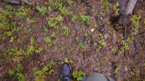 Hiker Walking in Rainy Autumn Pine Forest. 4K, Slowmotion pov from above. Karelia, Russia.  stock video footage