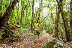 Hiker walking trekking in green forest Stock Images