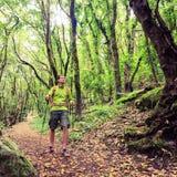 Hiker walking trekking in green forest Royalty Free Stock Photos