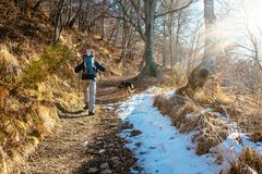 Hiker walks in snow-covered mountain. Hiker with snowshoes walks in the snowy woodland on a bright morning Stock Photography