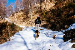 Hiker walks in snow-covered mountain with his German shepherd do. G Royalty Free Stock Photos