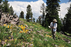 Hiker and wildflowers Stock Photo