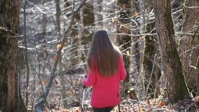 Hiker woman hiking in forest. Hiker woman hiking in autumn forest stock video