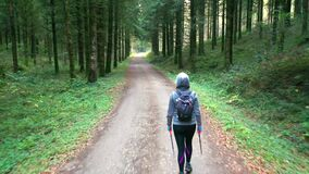 Hiker woman in a path and conifer trees forest. Navarre, Spain