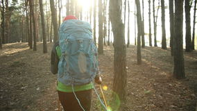 Hiker  woman walking hiking in forest with backpack. And trekking pole. steadicam shot stock footage