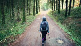 Hiker woman in a path and conifer trees forest. Navarre, Spain.