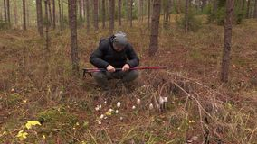 Hiker in the woods at fly agaric. In autumn day stock video