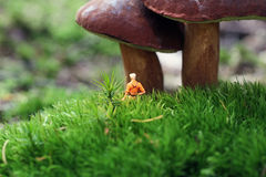 Hiker in the woods. Miniature hiker finds huge mushrooms Stock Photo