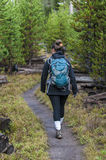 Hiker in Yellowstone Stock Photography