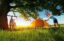 Hiker. Young sporty lady setting up a tent in a meadow under big oak's brunch Royalty Free Stock Photography